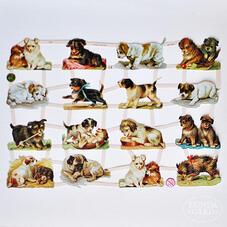 Kiiltokuvat - koirat