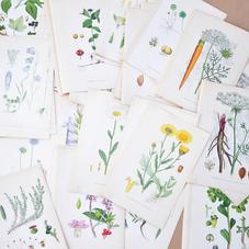 Gamla bilder på växter